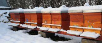 Зимовка пчел на воле