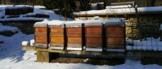 Почему пчелы шумят в омшанике