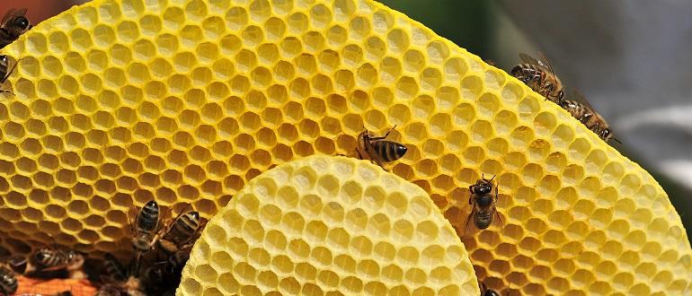 Применение пчелиного воска
