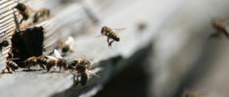 Первый весенний очистительный облёт пчёл