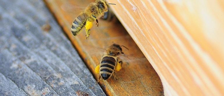 Белковая подкормка для пчел весной