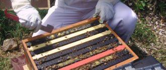 Лечение пчел весной