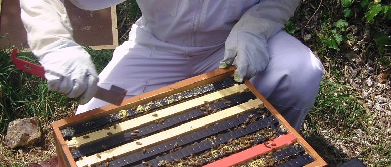 Осмотр пчел весной