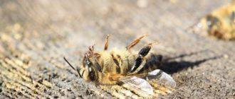 Все причины гибели пчел зимой