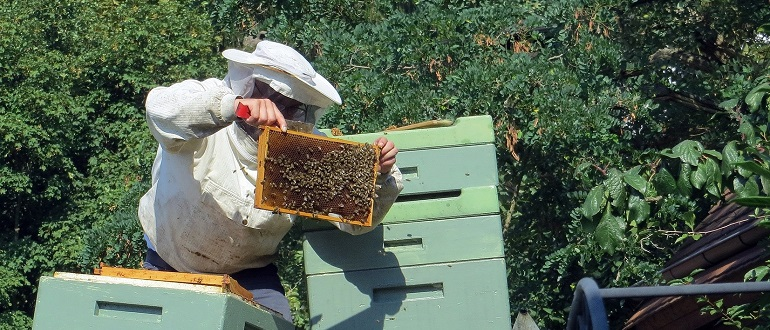 ревизия пчел